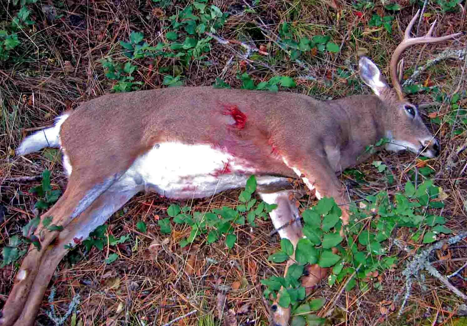 Poached Deer